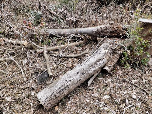 切るのを途中でやめた木