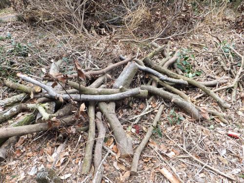 前回、積み込みしないで残した木