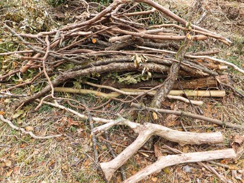 ツバキ、梅、ヒメシャラなどの木