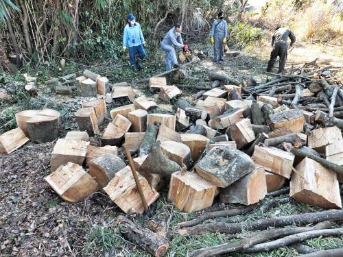 切った大量の木