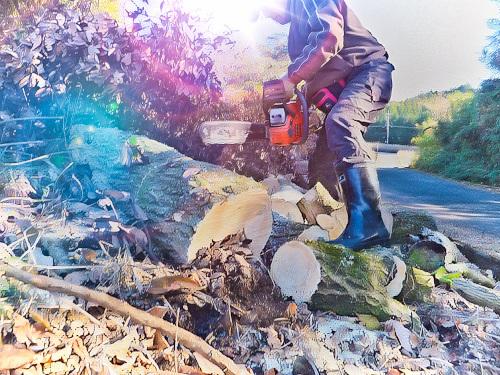 チェンソーで薪狩り