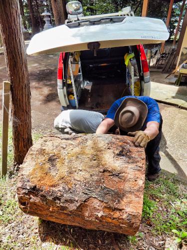 巨大な樫の木を積み込む