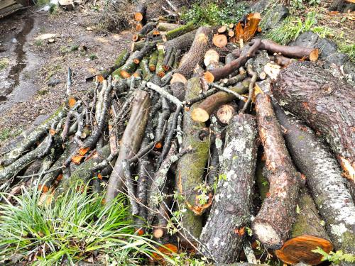 裏手に山積みされた木