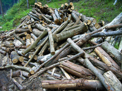 伐採された木の山