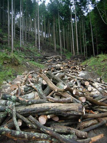 想像を超える木の量