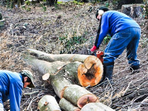 誰か一緒に薪にする木を取りに行ってくれる人はいますか