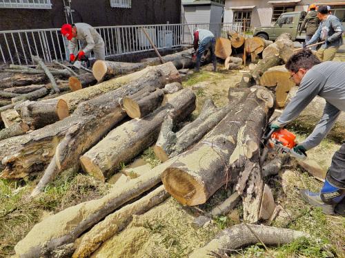 富士山薪ストーブクラブの薪狩りの様子