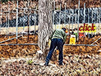 富士市 銀杏の立木など伐採の薪情報 事例