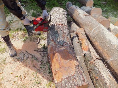 薪に適したクヌギの木