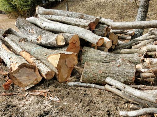 伐られた太い木