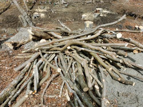枝の部分の木