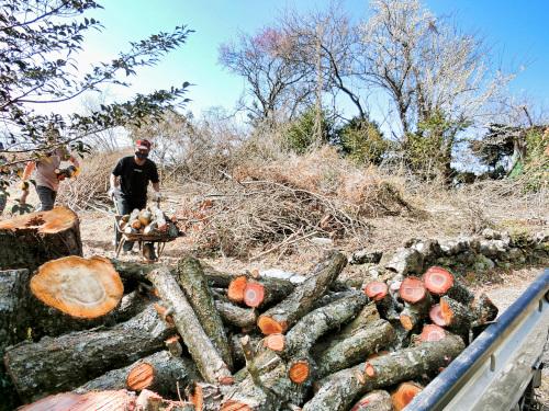 軽トラックの荷台の梅の木