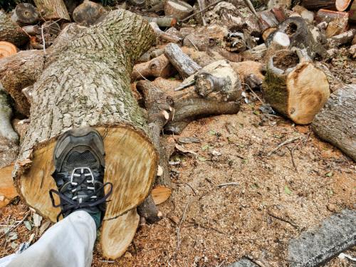 径が30センチ強の木