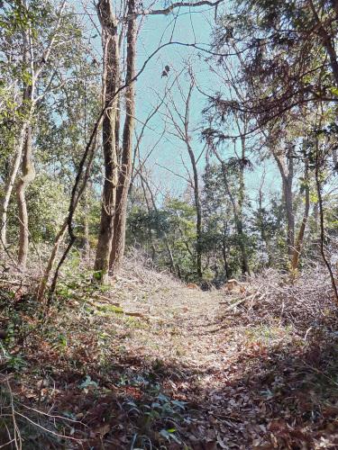 クヌギ林の入口