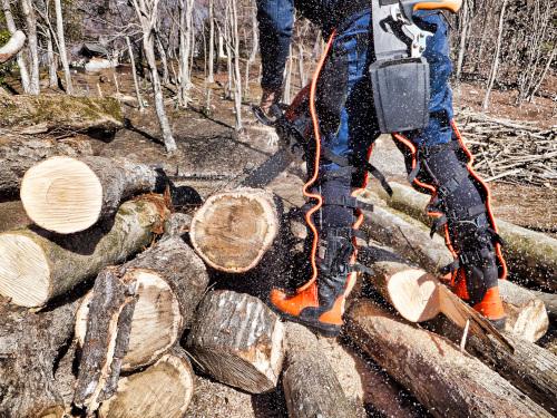 クヌギの木を切る