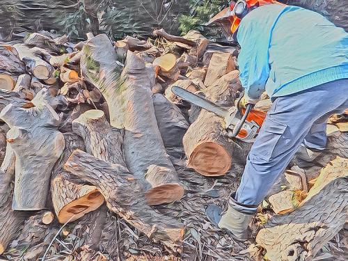 富士市にて薪狩り