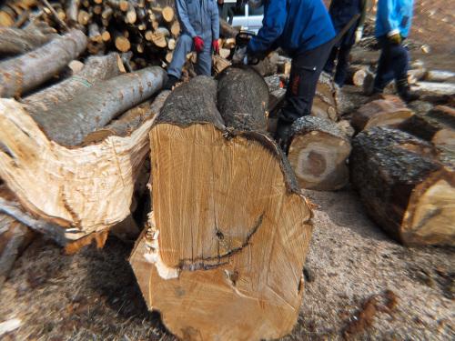 2本が1本になった木