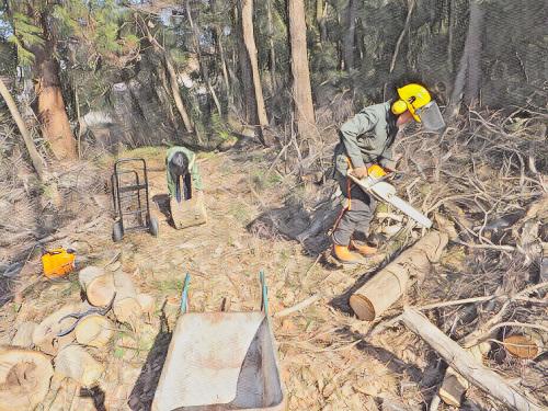 切って運ぶクヌギの薪狩り作業