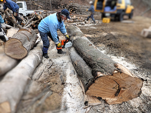 二本が一本になった木を切る