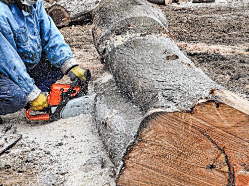 太い絡まった木を切る