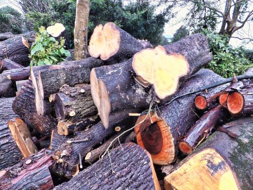 木置き場の木