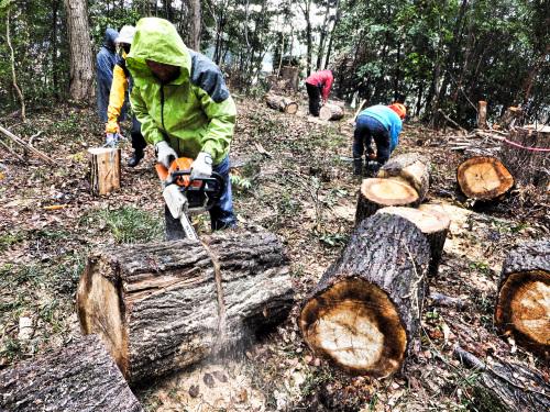 雨の中、クヌギ林で薪狩り