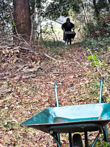 切った木を一輪車で運搬