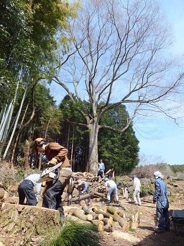 2017年4月の桜の木の薪狩り