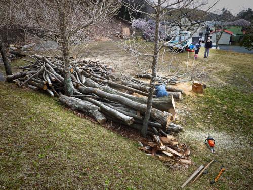 小山町の薪狩りの現場